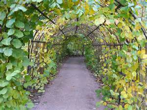 Winterbourne Botanic Garden The Hazelnut Tunnel At Winterbourne 169 Phil Chion Cc By Sa 2 0 Geograph Britain And Ireland