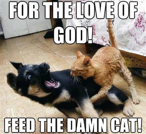 Dog And Cat Memes - 25 funny cat memes that will make you lol