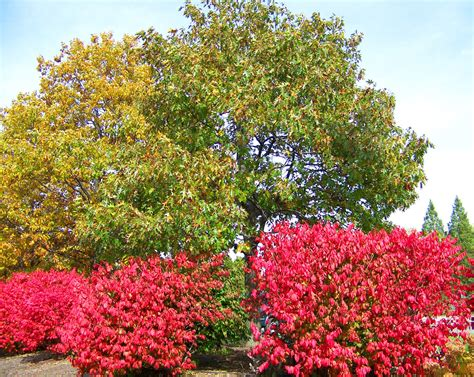 autumn trees and bushes free stock photo public domain