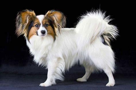dogs for time owners top 10 dogs for time owners petguide