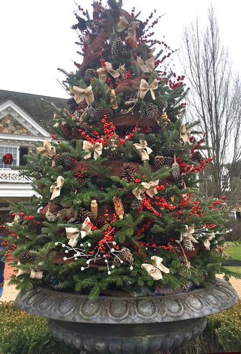 container christmass tree lancaster pa custom decor containers binkley horticulture