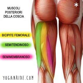 contrattura interno coscia 5 posizioni per allungare il bicipite femorale
