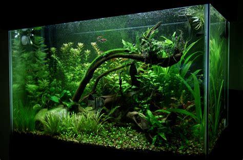 Aquascaping Ideas For Planted Tank by Aquarium Ideas On Fish Tanks Aquarium And Tanks