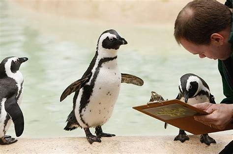 Take A Survey - penguins taking a survey