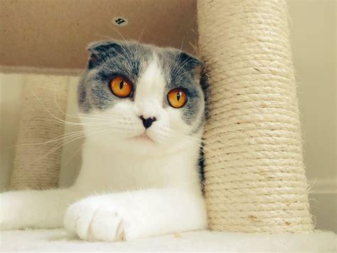 liriks  cat twitch tv cats twitch tv animals