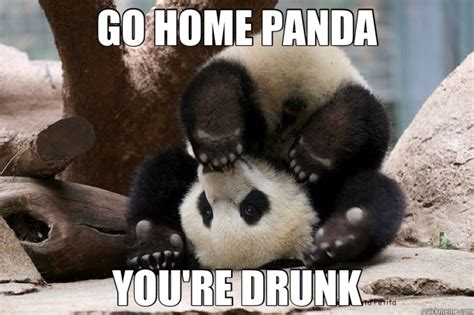 Drunk Panda Meme - drunk panda meme google search animals pinterest