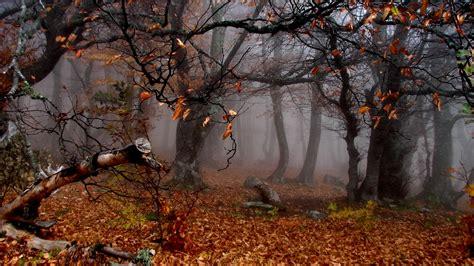 imagenes 4k naturaleza tierra naturaleza oto 241 o fondo de pantalla joyas