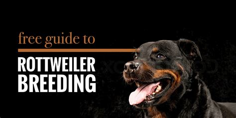 rottweiler mating guide to rottweiler health best practices and future
