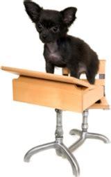 when should i start my puppy when should i start my puppy got sit
