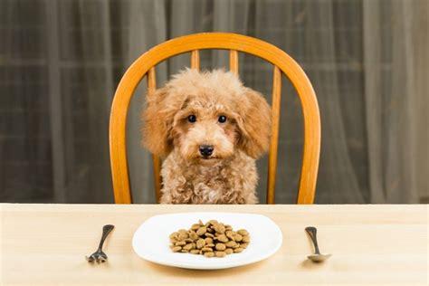 alt deutsche hutte hond was darf mein hund nicht essen giftige lebensmittel f 252 r