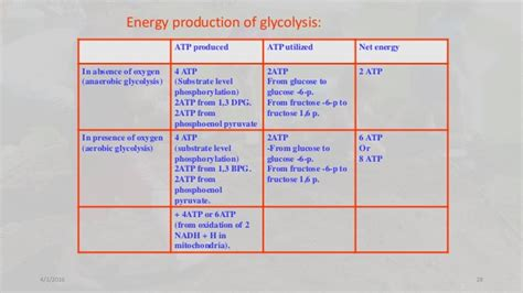 pattern energy balance sheet glycolysis