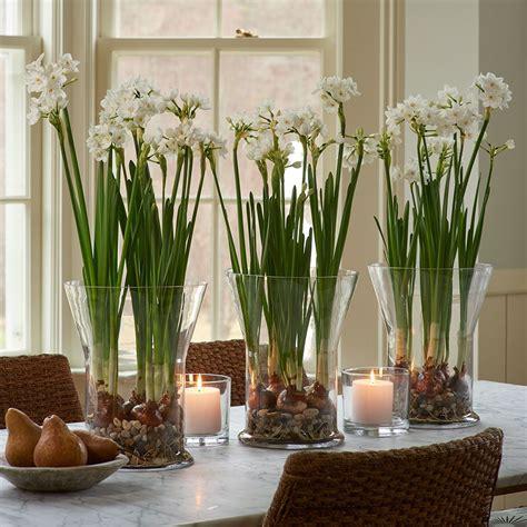 Paperwhite Vase by Paperwhite Ariel Kit In Glass Vase White Flower Farm