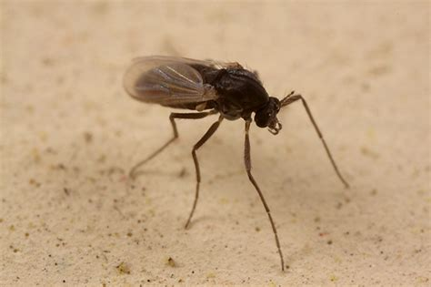 top 11 sand fly repellents traps zappers and collars - Sand Fliese