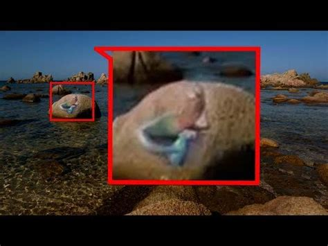las imagenes virtuales existen mira esta sirena real durmiendo en una roca las sirenas