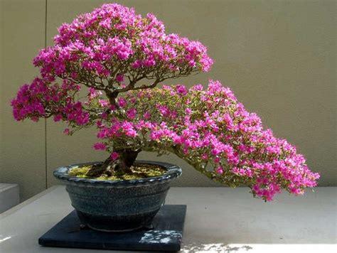 merawat tanaman bunga  pot tanaman hias bunga