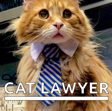 Lawyer Cat Meme - law cat image 3037593 by helena888 on favim com