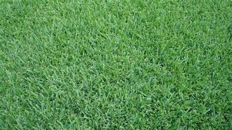 St Grass Grass Selection In Gerogia Brightwater Landscaping