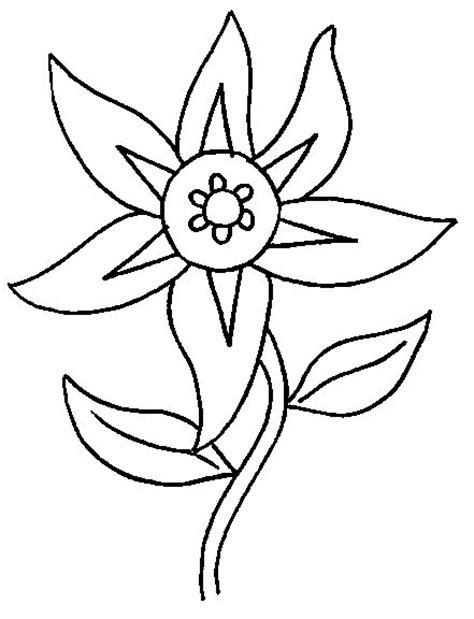 edelweiss flower coloring page flowers coloring pages coloringpages1001 com