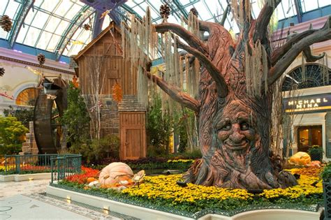 botanical gardens in las vegas fall into autumn at bellagio s conservatory botanical