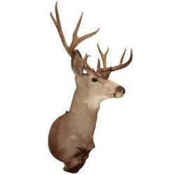 Sconces Antique Taxidermist Deer Head At 1stdibs