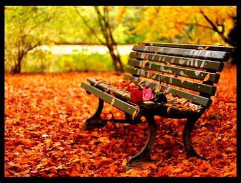 fall bench original size of image 1098462 favim com