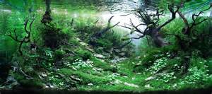 amano aquascape aquascaping