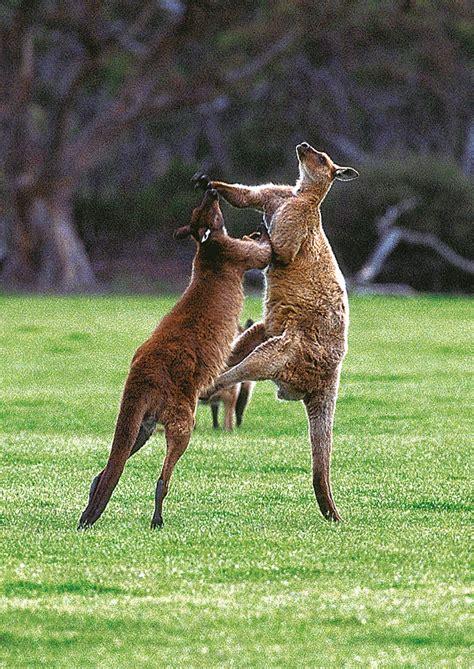 kangaroo island south australia landscape photography