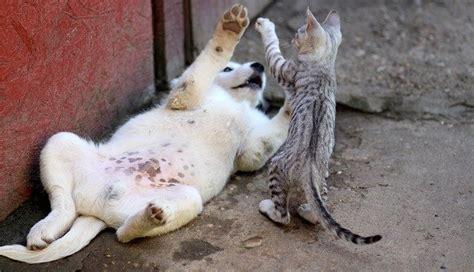 animali da casa giochi per animali fai da te come realizzarli in casa