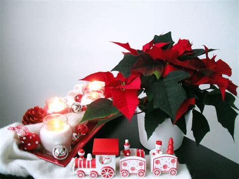 Weihnachtsstern Pflegen Wohnung by Weihnachtssterne Pflanzenklick
