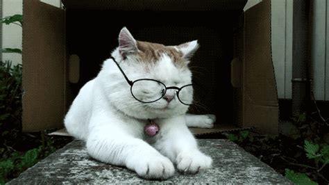 download gambar format gif lucu kumpulan gambar gif lucu edisi kucing unic10