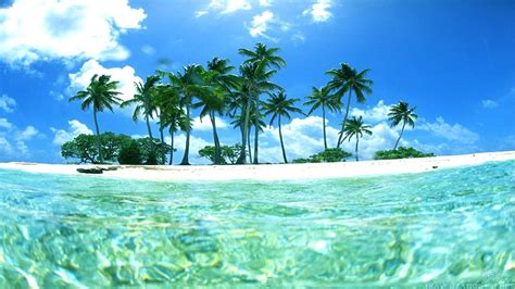 tropical island wallpaper with fish 49 images