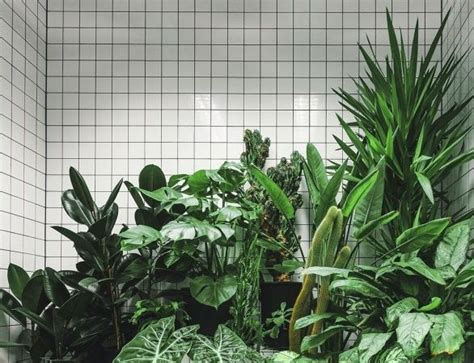 grunge plant green green grunge grunge plants pale