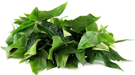 Dark Green Color Meaning by Sweet Potato Leaves Information Recipes And Facts