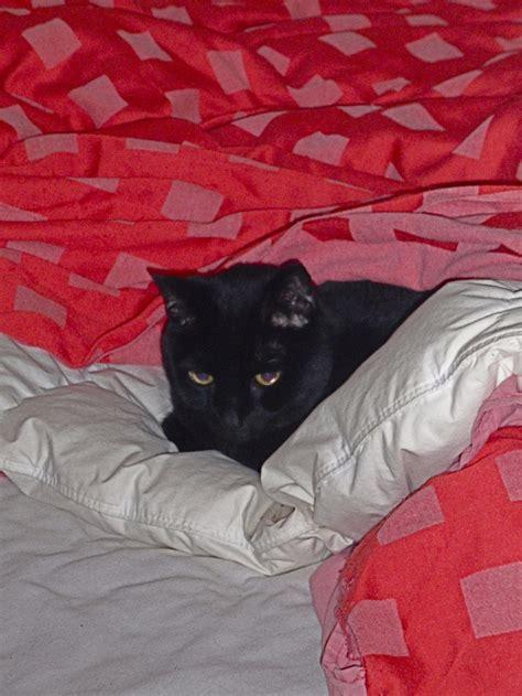 still in bed still in bed daily lucifer pinterest