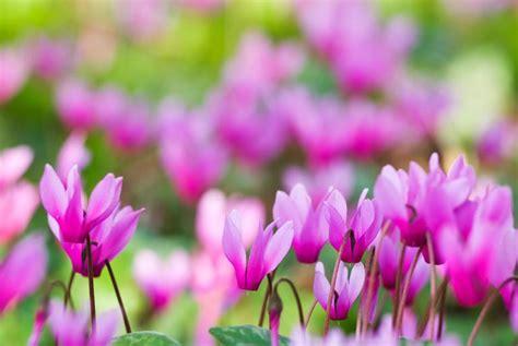 lidl offers  week cut price  cheerful plants