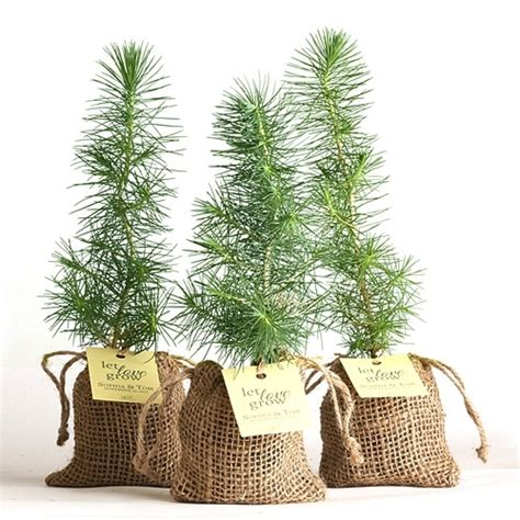 Wedding Favors Trees by Pine Tree Plant Favor Burlap Pouch At Easternleaf