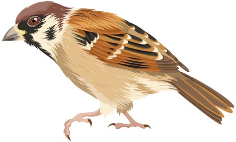 sparrow clipart sparrow png clip image gallery yopriceville high