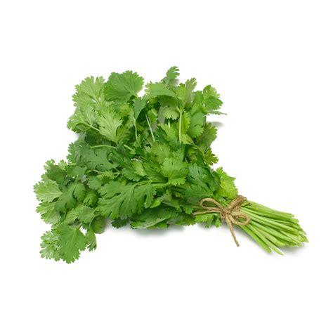coriander cilantro coriander cilantro new holland chips