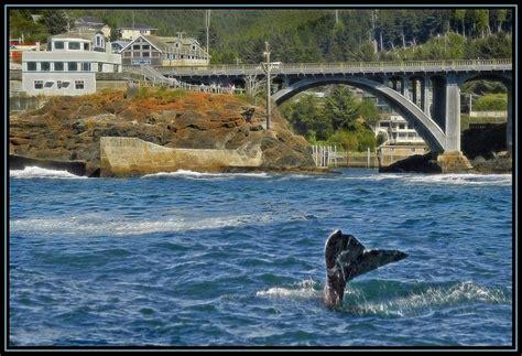depoe bay oregon whale watching west coast vaca