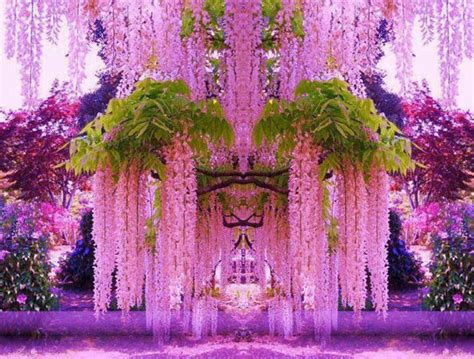 Flower Garden In Japan A Purple Wisteria Flower Garden In Japan