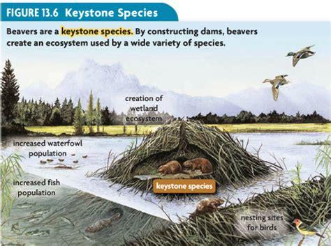 biotic and abiotic factors kis ecology