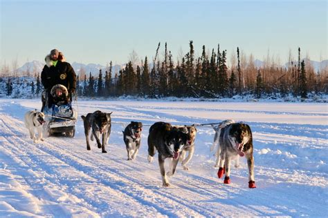 sledding alaska alaska mushing school