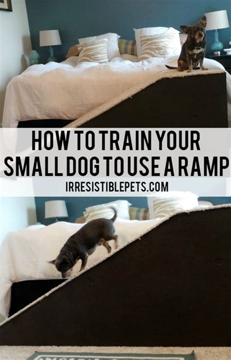 how to train your dog to use the bathroom outside how to train your small dog to use a r irresistible pets