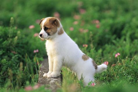dogs wallpapers full hd 1080p best hd dogs wallpapers gg yan best dog full hd 1080p dog wallpapers free download