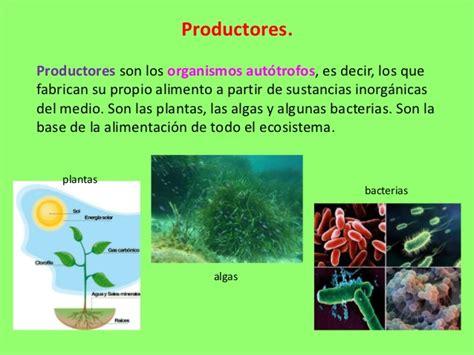 cadena alimenticia quienes son los productores 5 1 productores seres vivos 4to grado