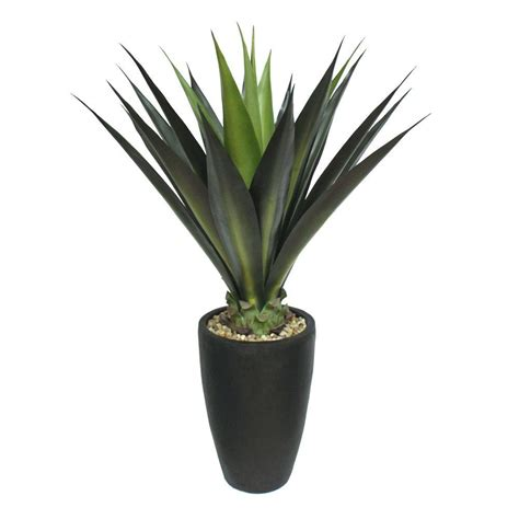 Planters Plants by Nearly Agave Plant With Black Planter 4856 The
