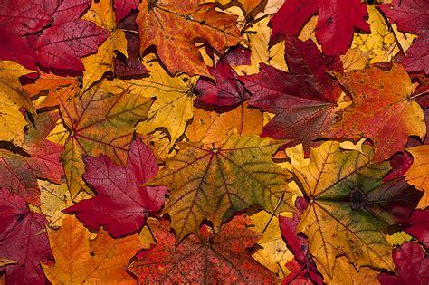 fall autumn 11 photos that will make you crave autumn
