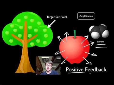 018 positive and negative feedback loops — bozemanscience