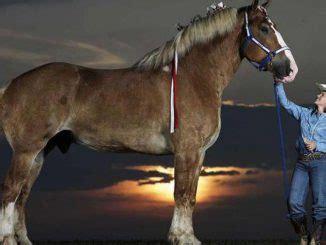 Gr Te Pferd Der Welt by Tiere Archives Seite 4 Von 5 Wie Gross Wie Schwer
