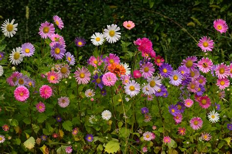 grow beautiful fall flowering perennials fall flowering perennials fall blooming perennials 28